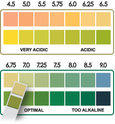 Your illness could be linked to your body's pH balance. How to maintain a healthy pH balance for good health!